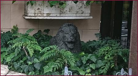 ひっそりライオン